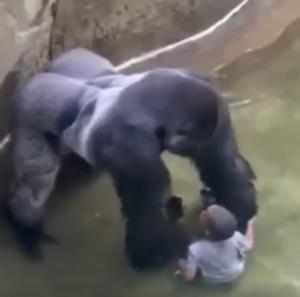 gorillaBimbo 2